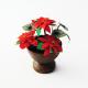 Vaso com flor de Natal