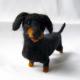 Miniatura de dachshund